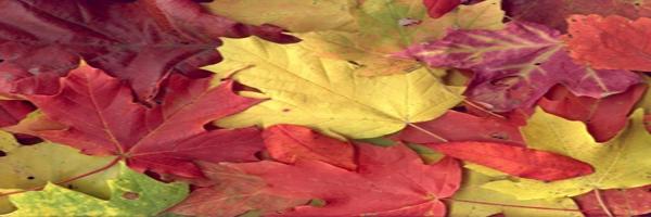 Mein schöner Herbst!